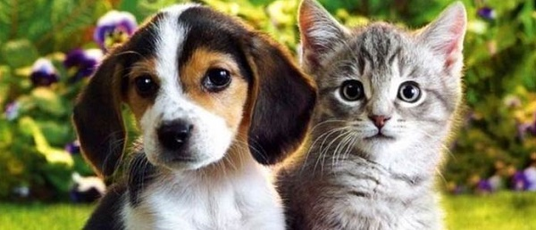 Dog Cats Or Dogs Have Better Sense Of Smell