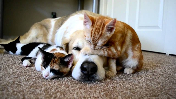 dogs-cats-better-sense-smell